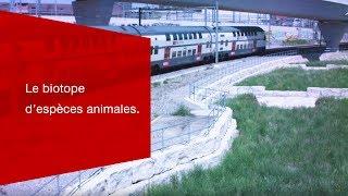 Download À Zurich, le faisceau de voies est devenu le biotope d'espèces animales menacées. Video