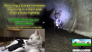 Download Rescuing a scared homeless dog living under a busy highway - Please SHARE so we can find him a home. Video