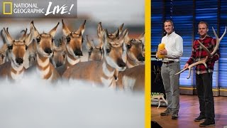 Download Photographing Animal Migrations, the Heartbeat of Yellowstone | Nat Geo Live Video