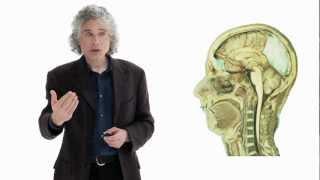 Download Steven Pinker: Linguistics as a Window to Understanding the Brain Video