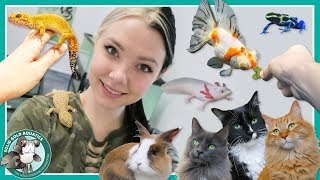Download Feeding All My Pets! // VLOGMAS DAY 8 Video