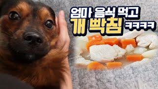 Download 엄마가 해준 음식 vs 파는 음식! 엄마꺼먹고 개빡침 ㅋㅋㅋㅋ Video