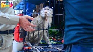 Download Finally! Say goodbye & sent Lori & Amari to Wildlife Alliance Rescue Org to care | Monkey Daily 1599 Video