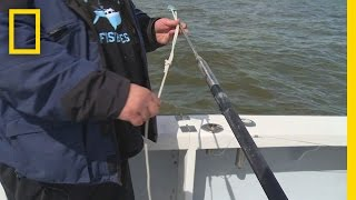 Download Fishing Tips: How to Rig a Harpoon | Wicked Tuna: Outer Banks Video