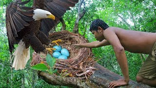 Download Primitive Technology - Found A Eagle Nest in Forest n Eating to Survival Video