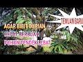 Download AGAR BIBIT DURIAN CEPAT BERBUAH POHON PENDEK BUAH LEBAT. Video