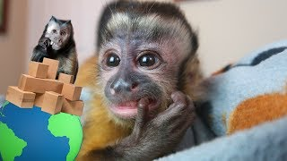 Download Baby Monkey Mail Vlog! Video