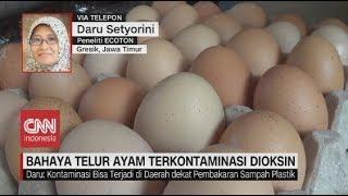 Download Ratusan Telur di Tropodo, Jatim Terkontaminasi Bahan Kimia Video