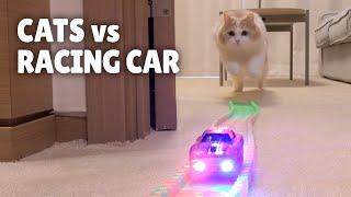 Download Cats vs Racing Car Video
