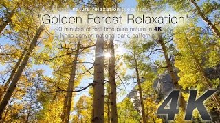 Download 90 Minute 4K Nature Experience: ″Golden Forest Relaxation″ by David Huting Video