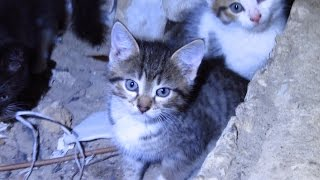 Download Funny kittens with mother cat in a dirty basement Video