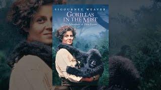 Download Gorillas In The Mist Video