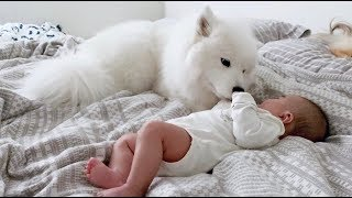 Download 새로 태어난 동생을 너무나 사랑하는 강아지 Video