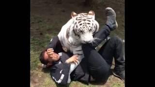 Download VIDEO PERSAHABATAN MANUSIA & HEWAN BUAS | ASLI KEREN BANGET !! Video