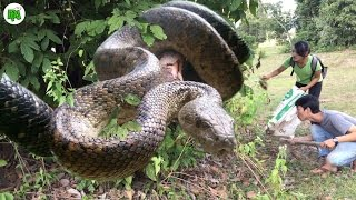 Download Amazing Girl Catches Giant Anaconda in The Jungle - How to Catch Water Snake in Cambodia Video