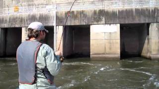 Download Ft. Loudoun Dam Tailwater Stripers Video