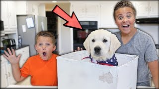 Download SURPRISING MY LITTLE BROTHER WITH A PUPPY! * EMOTIONAL * Video