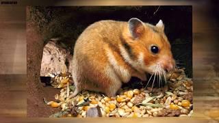 Download 10 Najkrócej żyjących zwierząt świata Video