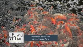 Download รายการ ทำงานทำเงิน ธุรกิจ ฟาร์มปลาคราฟ Part3/3 06 ก.ย. 59 Video