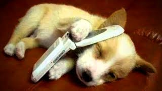 Download Cute Pets 😍😍 Cute Dogs Doing Funny Things (Part 1) [Funny Pets] Video