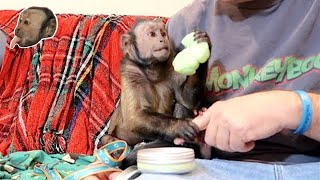 Download Monkey EXCITED For Silly Putty! Video