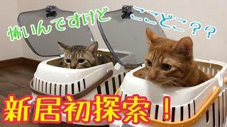 Download 猫達と引っ越し!新居を探索する姿がかわいい! Video