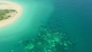 Download Great Barrier Reef hit by coral bleaching Video