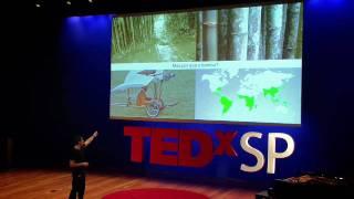 Download Flavio Deslandes at TEDxSaoPaulo Video