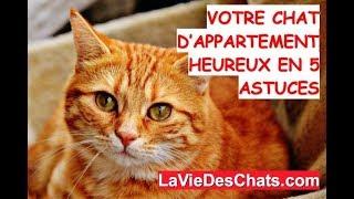Download Votre 🐱 chat d'appartement heureux ? Le test en 5 astuces Video