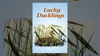 Download Lucky Ducklings Video
