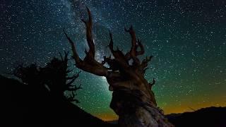 Download Nature at Night [4K][2160p] Video