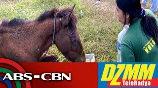 Download Batangas eyes sanctuary for animals abandoned after Taal exodus | DZMM Video
