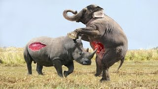 Download Elephant vs Rhino Real Fight - Animal World - Animals Fight Video