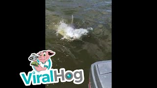 Download Bull Shark Stole Our Fish Video