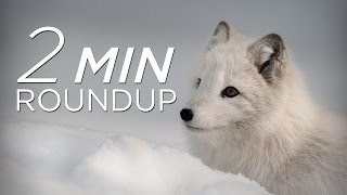 Download Polar bear cubs, baby beluga & more adorable animals Video