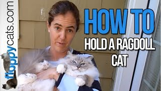 Download How to Hold a Ragdoll Cat - How to Pick Up a Ragdoll Cat - ねこ - ラグドール - Floppycats Video