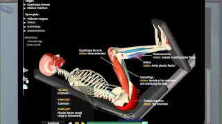 Download Leg Press Anatomy Video