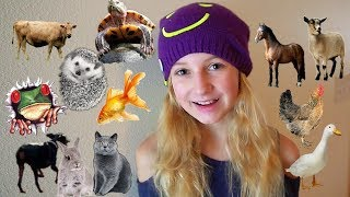 Download All MY Animals In One Video Video