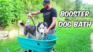 Download Home Pet Spa or Booster Dog Bath Video