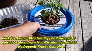 Download Back To Basics: - How to Plant a Non-Circulating Outdoor Hydroponic Kratky Container Video