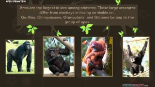 Download Animal Videos for Kids: Primates Video
