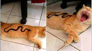 Download 「귀여운 고양이」웃지 않으려 노력하십시오 가장 웃긴 고양이 영화 😸 Video