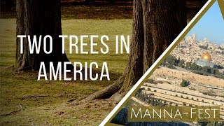 Download Two Trees in America | Episode 906 Video