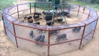 Download 30' Hog Trap T A C Trap 2013 Video