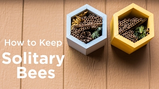Download How to Keep Solitary Bees Video