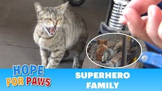 Download Superhero mom tells me to BACK OFF!!! (But her kittens were so cute). Video