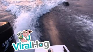 Download Killer whales (orcas) chase our boat near San Diego Bay Video