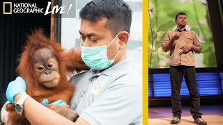 Download Saving Orangutans in Sumatra's Disappearing Rain Forests | Nat Geo Live Video
