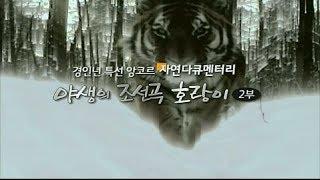 Download EBS 자연 다큐멘터리 야생의 조선곡 호랑이 2부 Video