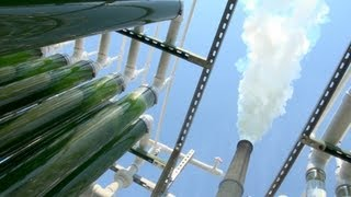 Download Algae CO2 Capture at the University of Kentucky: Part 1 Video